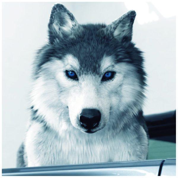 Ranger FX4 Wolf